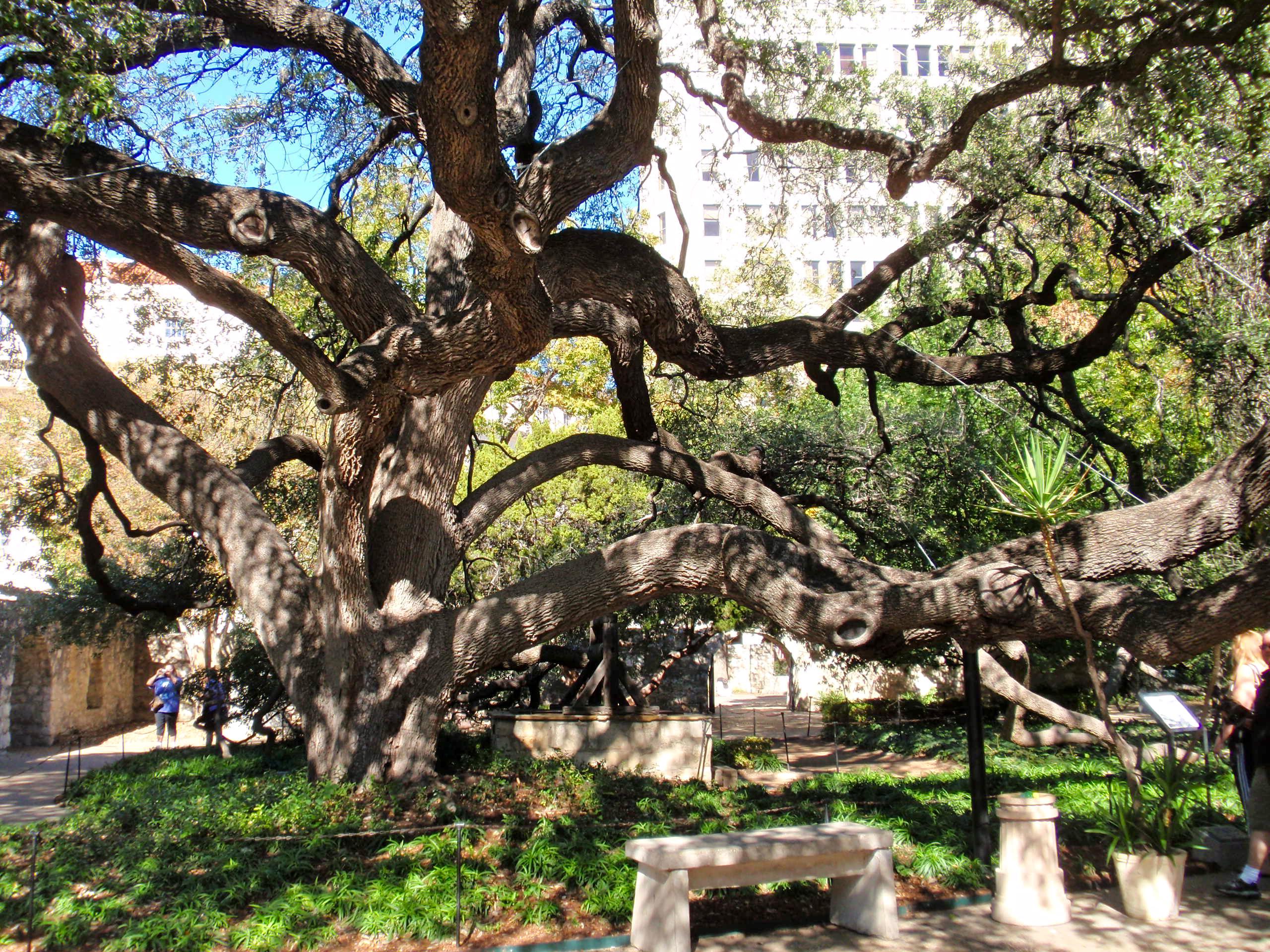 San Antonio Missions Historical Park Paint Your Landscape