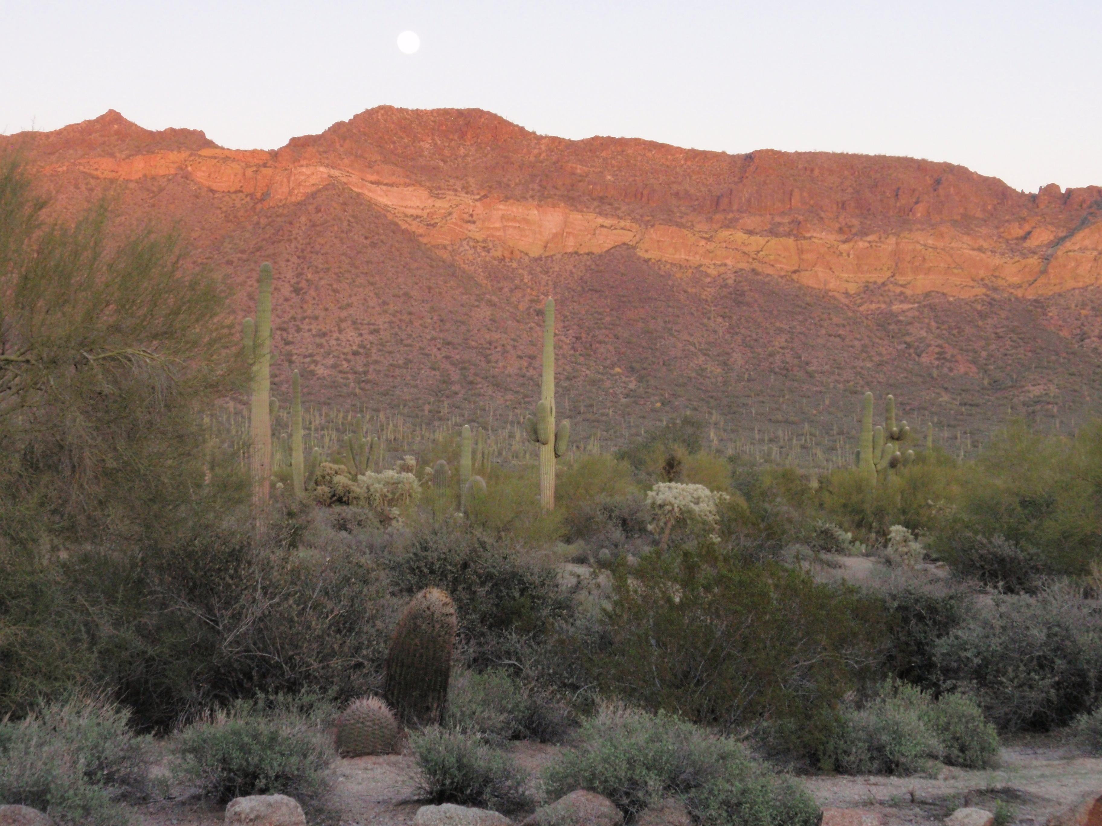 Arizona – Page 5 – Paint Your Landscape