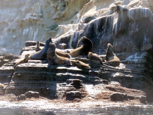 Sea lions at La Jolla sea caves