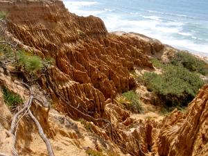 torrey pine sandstone cliffs