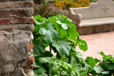 Garden glimpse