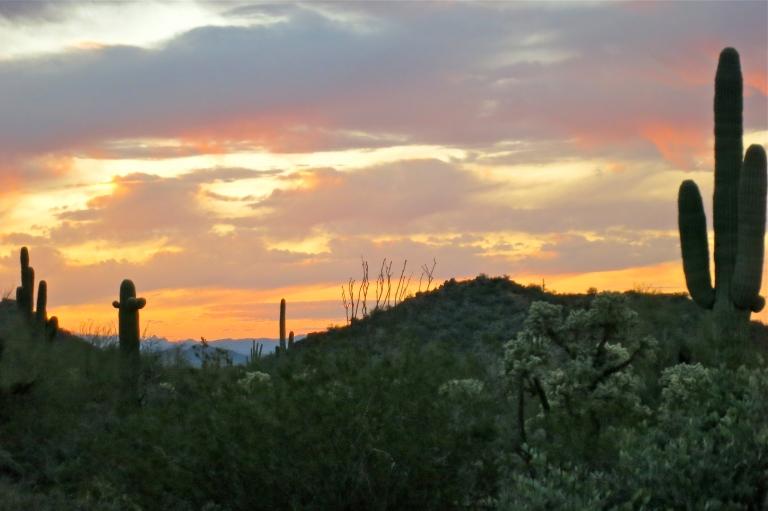 Desert awakening