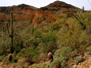 Spring's arrival in the desert