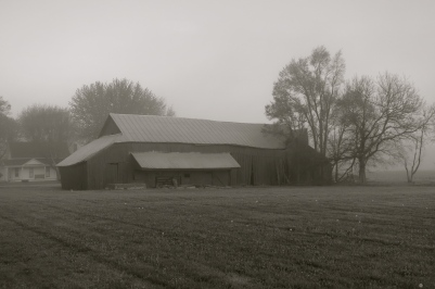 Foggy country morning