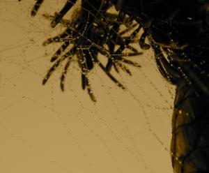 Sepia hued web