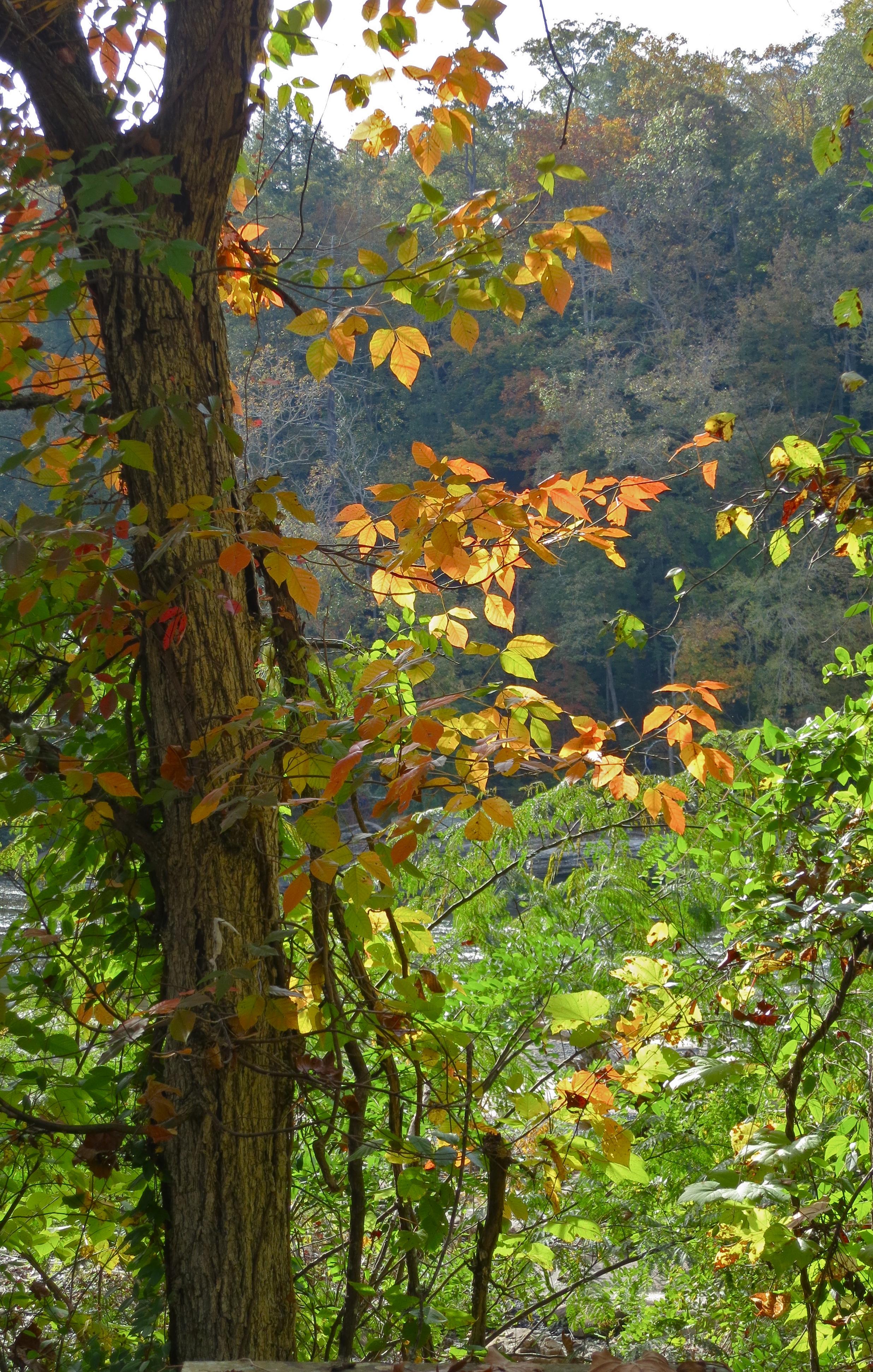 Autumn leaf color – Paint Your Landscape