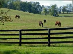 Horses dotting the hills