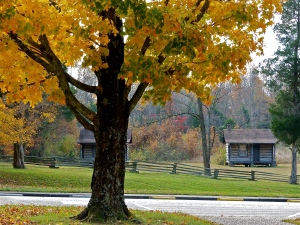 A golden autumn day at Sinking Spring Farm