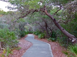 Green canopy covers the walkway to the beach