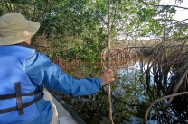 Sitting in the front of the boat, I was in charge of clearing out the spiderwebs from the mangrove tunnels for Terry and the tour guide - lucky me!