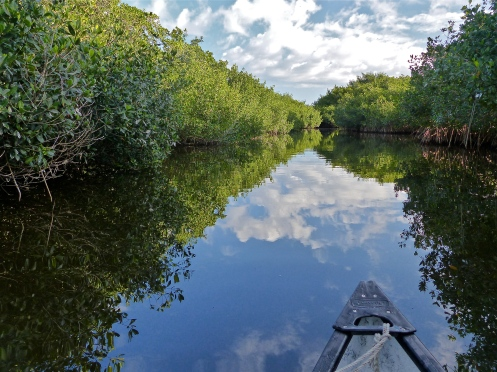 Journey into the mangrove tunnels
