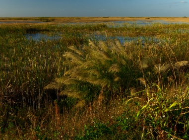 Late afternoon across the Everglades