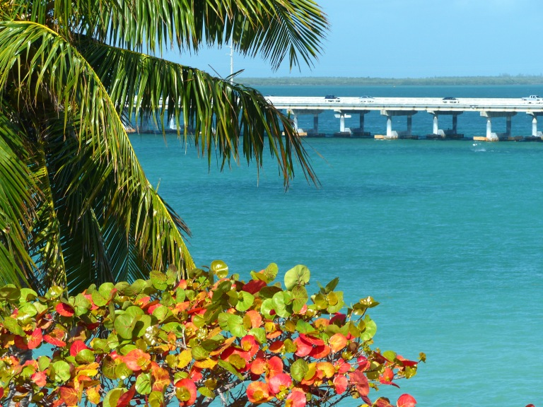 Coconut palms, sea grape & turquoise waters frame a glimpse of the new Bahia Honda Bridge.