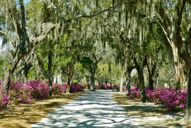 Oak shaded, azalea-lined streets