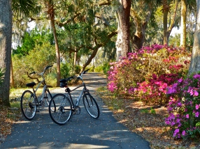 A border of colorful azaleas
