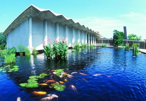 Koi pond at USNA - photo credit www.fona.org
