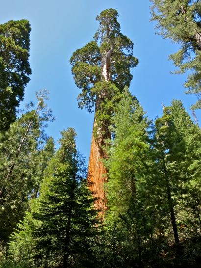 Kings Canyon National Park ~ CA