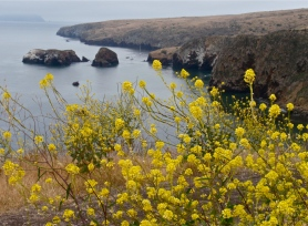 Channel Islands National Park ~ CA