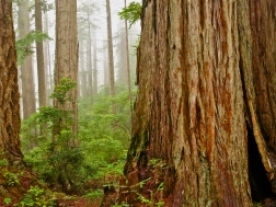 Redwoods National Park ~ CA