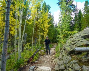Golden aspen lining the trail