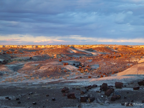Final rays cast a golden glow over the desert, with petrified wood strewn across the landscape.