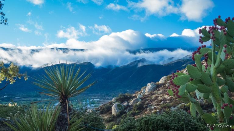 Jojoba Hills_141220-1150923