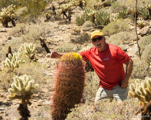 Frank getting cozy with a barrel cactus while the teddy bear cholla close in.