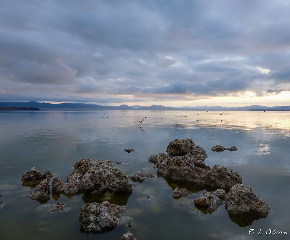 Mono Lake Pictures 118