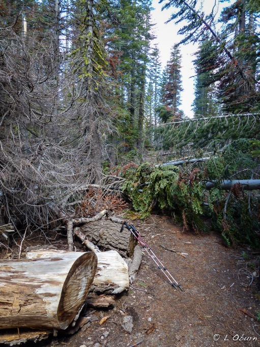 Manzanita Creek Trail strewn with downed trees