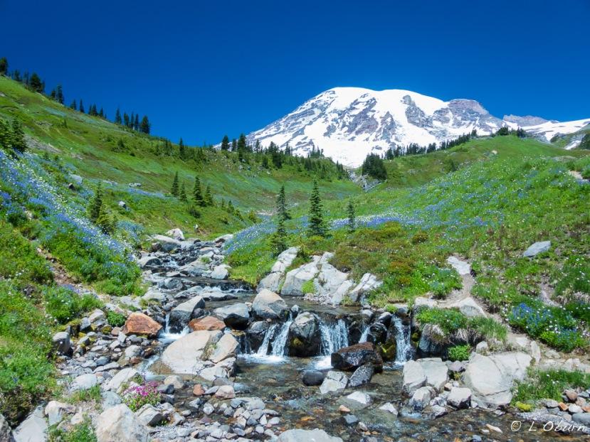 Hiking Extravaganza~ Mt. Rainier NationalPark