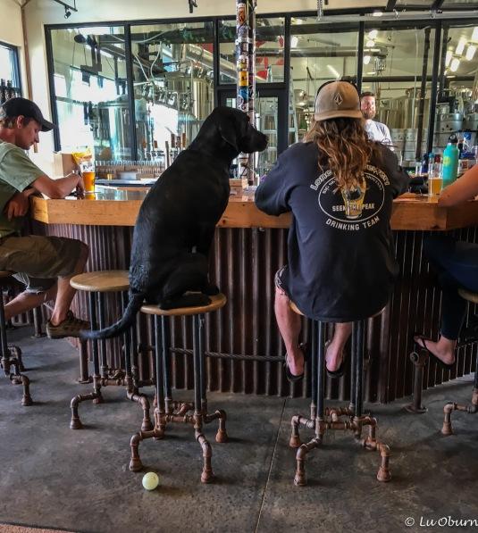 Bartender, where's my beer?