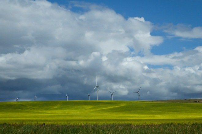 Wind turbines stand in the canola fields near Pincher Creek, en route to Cochrane
