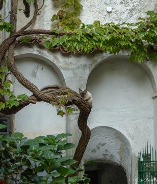 Cat on a vine