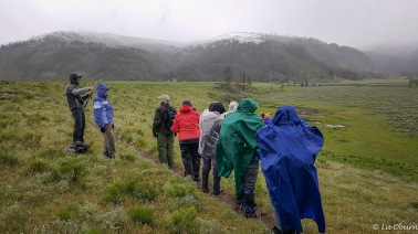 Waiting in the inclement weather to find our collared cow bison