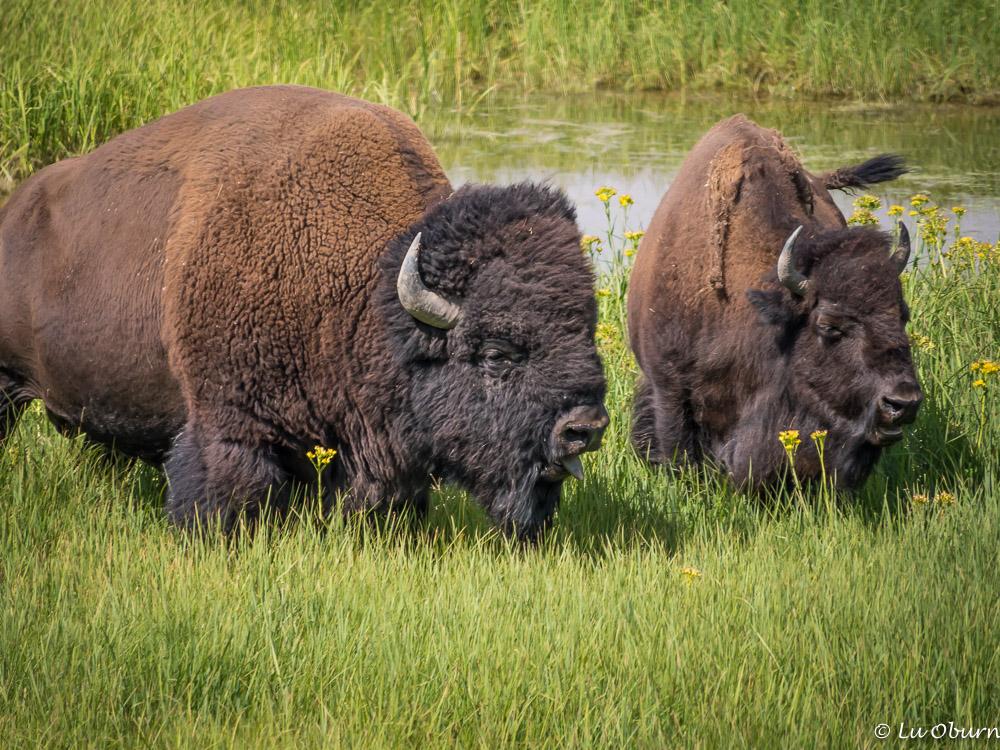 Casual sex in bison south dakota