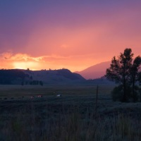 The Bison of Yellowstone ~ Yellowstone Forever Field Seminar Series, Part 1
