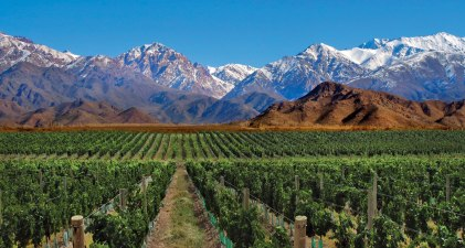 Mendoza Vineyard (photo credit: magazine.tablehotels.com)