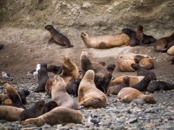 Lots of pups, dark in color.