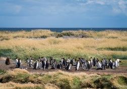 Tierra del Fuego National Park ~ Punta Arenas, Chile