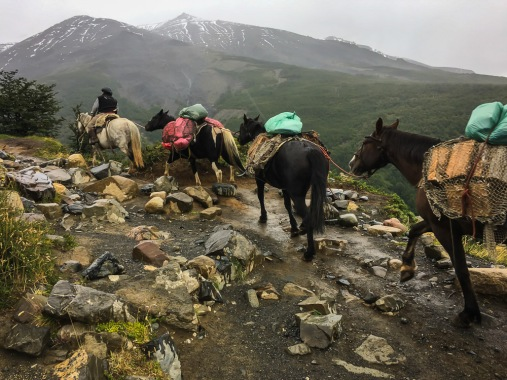 Chilean caballos heading up the mountain to resupply the camps.