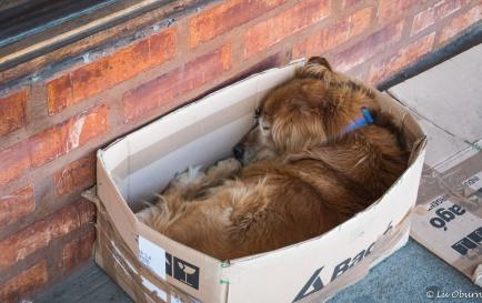This fella found a home to take a nap.