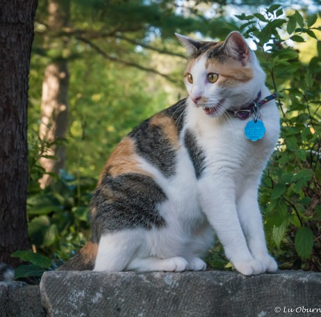 A beautiful little kitty found in the garden of the Schoolhouse B&B, where we stayed in Rocheport.